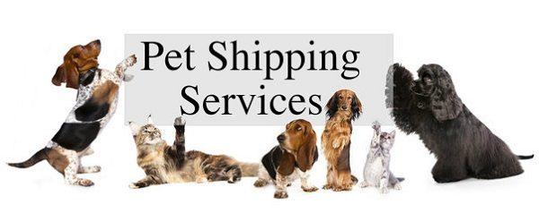 pet shipping 2