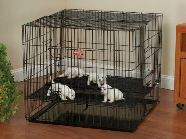 puppies playpen